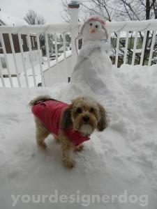dogs, designer dogs, yorkipoo, snow, snowman, snowlady